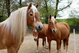 Pferde, Hunde, Katzen...